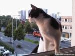 2000-07-19 - Grouik on the window