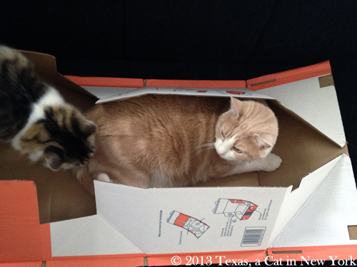 Kitshka: Hiya Texas! Can I come play in your box? Texas: No!