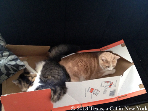 Kitshka: Don't take so much room, Texas! Texas: Yep, I need another box...